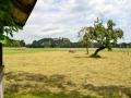 Blick auf Neubeuern- Sommer-